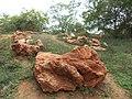 கல்மரங்கள் (Fossil Tree ). திருவக்கரை, விழுப்புரம் மாவட்டம், தமிழ்நாடு. 2013 மேயில் எடுக்கப்பட்ட பு.jpg