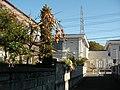 もぎ取りたくなる柿 - panoramio.jpg