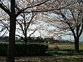 グランデュール鴨川前 - panoramio (4).jpg
