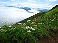 ハクサンイチゲと雲海 - panoramio.jpg