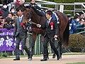 ロードカナロア引退式 - 京都競馬場 - Retirement ceremony of Lord Kanaloa - Kyoto Racecourse (12050791626).jpg