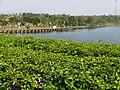 台南都會公園 Tainan Metropolitan Park - panoramio.jpg