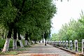 图们江边林荫路 a shady path by Tumen River - panoramio.jpg