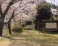 桜(城山公園) - panoramio.jpg