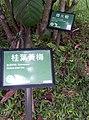 植物園中的植物及樹木花草(包括歷史遺跡)-31.jpg