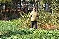 生态蔬菜 - panoramio.jpg