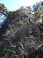 稲村岩 2011-02-26 - Inamuraiwa - panoramio.jpg