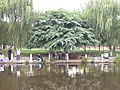 马鞍池公园里的垂钓者 - panoramio.jpg