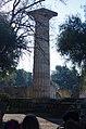 02 2020 Grecia photo Paolo Villa FO199983 bis (Olimpia parco archeologico - Tempio di Zeus colonna di ordine dorico - Temple of Zeus column doric order).jpg