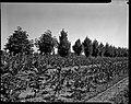 04.08.1964. Vue de la propriété. (1964) - 53Fi4727.jpg