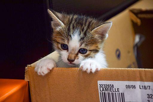un petit chaton qui sort du carton