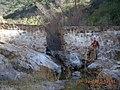 170315-FS-Cleveland-OW-003 San Juan Creek Dam Removal (32779029053).jpg