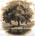 1838 GreatTree BostonCommon Pendelton GWLight.png