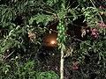 1 - Noite de lua cheia - Base Rota do Mergulho - Rifaina - SP.jpg
