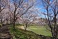 1 Chome Sakura, Tsukuba-shi, Ibaraki-ken 305-0003, Japan - panoramio.jpg