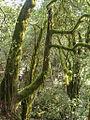 2000-11-06 Nationalpark Garajonay 11060001.jpg