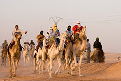 A local camel race