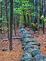 2007 Marlborough State Forest stone wall Massachusetts 2045893330.jpg