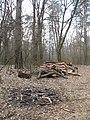 2009-04 Санітарними рубками намагаться знищити найцінніші дерева проектованого заказника Чернечий ліс (6).jpg