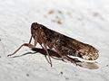 2010-06-19-Insecto en Soigrexa Bastavales d.jpg