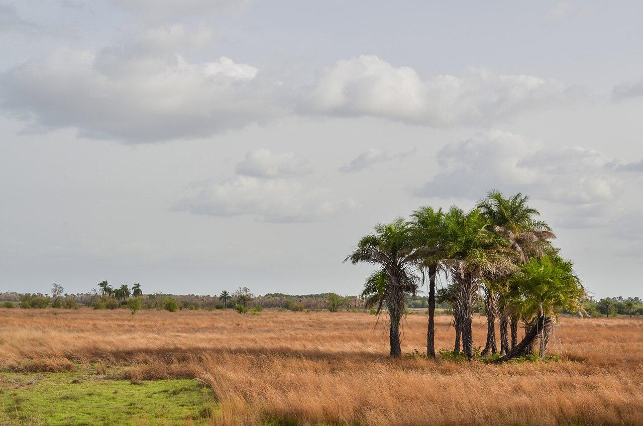 Pemandangan khas di Guinea-Bissau