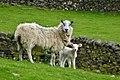 2014 Ewe and Lamb.jpg