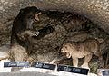 2015 Jaskinia Niedźwiedzia w Kletnie, modele zwierząt 02.JPG