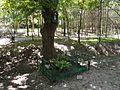 2017 Warszawa kapliczka nadrzewna w parku Strumykowa.jpg