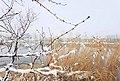 20191130 北京大雪10.jpg