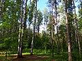 2151. St. Petersburg. Sosnovka Park.jpg