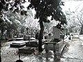 33. Bucuresti, Romania. Din Ciclul BUCURESTIUL SUB ASEDIUL FRIGULUI, Ianuarie 2019. Cimitirul Bellu Catolic. (Peisaj hibernal).jpg