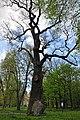 46-258-5025 Nemyriv Oak RB 18.jpg