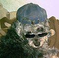 4ndys Hund.jpg