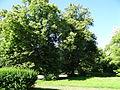 617683 A 683 Krakow Krzesławice Wankowicza 25 park w zespole dworsko parkowym 28.JPG