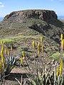 8 Àloe vera i Montañeta Redonda, des de la Degollada de las Yeguas.jpg