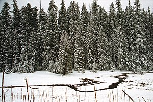 Alpine, Arizona - Apache-Sitgreaves National Forest, south of Alpine