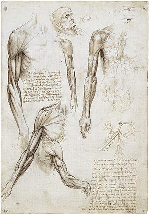 Écorché - Écorché by Leonardo da Vinci.