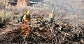 A firefighter uses a drip torch to light a vegetation pile in upper Courthouse Wash. These piles are accumulations of plant (7638c2c1-e9d0-479c-8cd0-cda5c2fbb8f4).jpg