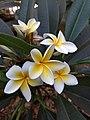 A flower10.jpg