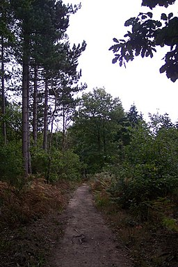 A footpath in Clowes Wood - geograph.org.uk - 1520893