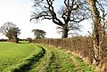 A hedge-lined path - geograph.org.uk - 1596458.jpg