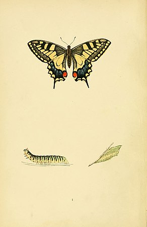 A history of British butterflies (6073599266).jpg