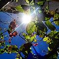 A magia das vegetações do meu Sergipe. 02.jpg
