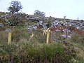 A rocky outcrop, Creea - geograph.org.uk - 1089675.jpg