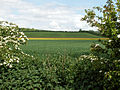 A view east from north of village, Belton (nr Grantham) 02.jpg
