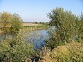 A view of the Great Stour - geograph.org.uk - 1010613.jpg