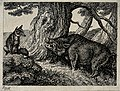 A wild boar chafing its neck against a tree while a fox seat Wellcome V0020721ETL.jpg