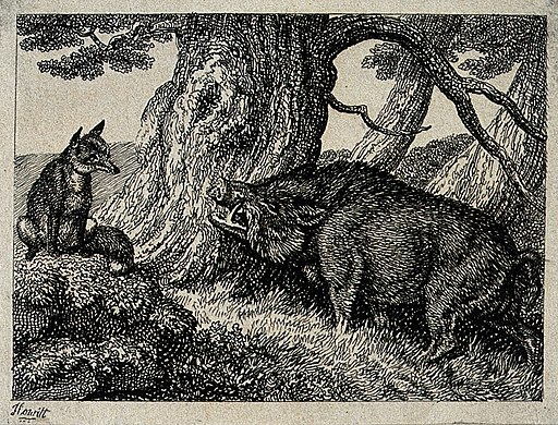A wild boar chafing its neck against a tree while a fox seat Wellcome V0020721ETL