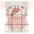 File:Abdominal Quadrant Regions Cleaned.png - Wikimedia ... | 120 x 118 png 20kB