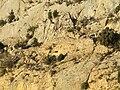 Abella de la Conca. Santa Cauberola 5.JPG